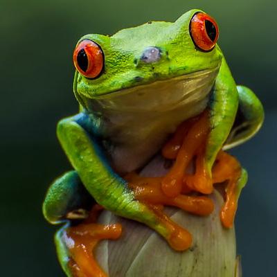 Treefrog-Positive.jpg