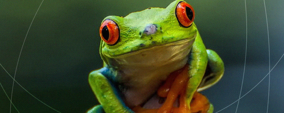 Salvari Jewellery Eco Pendant Treefrog