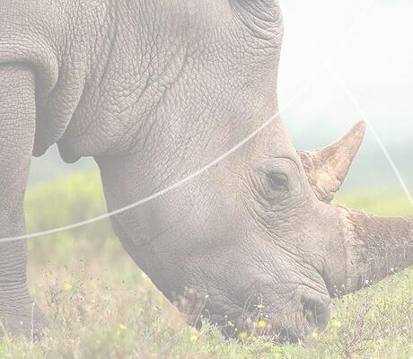 Salvari Jewellery Eco Pendant Rhinos